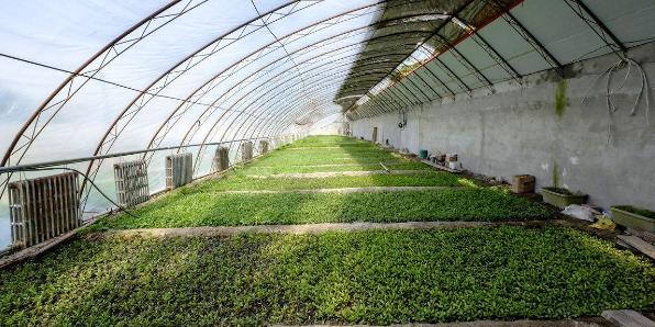 塑料大棚小气候调控及其在蔬菜上的应用