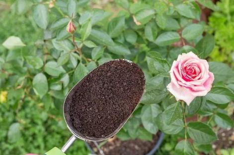 常用肥料施用应注意的几点问题