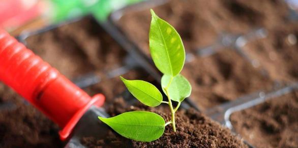 我国土壤环境监测及修复技术现状