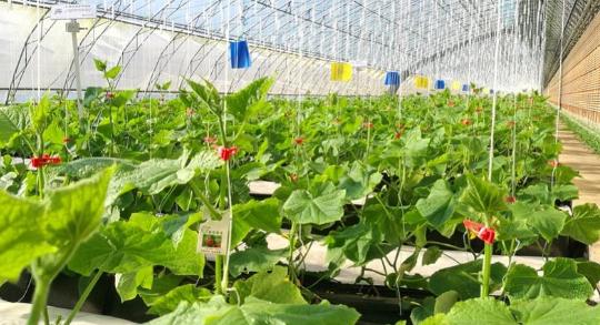植物保护技术与病虫害综合治理探讨