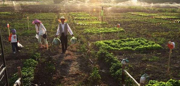 我国家庭农场发展现状及对策