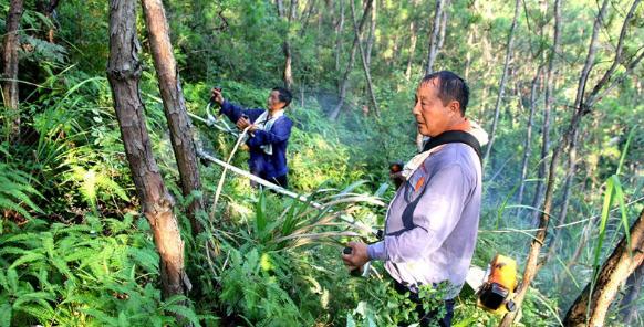森林抚育技术措施及实施要点研究