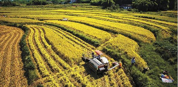 小农户融入农业产业链的路径研究