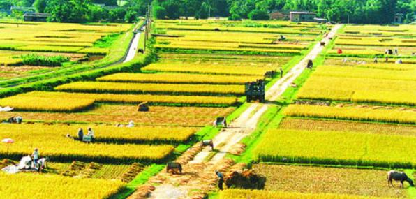 农业生产要素替代弹性的研究现状与发展