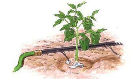 水肥一 体化技术