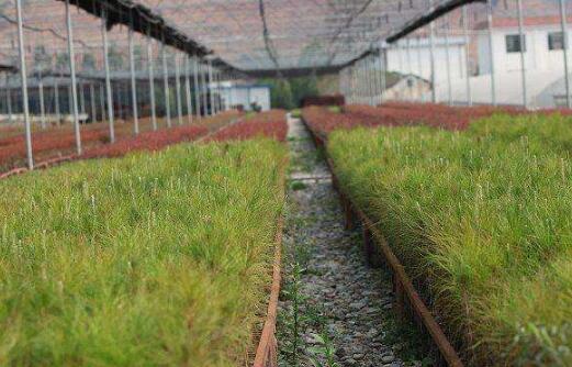 林木种苗的培育及管护初探