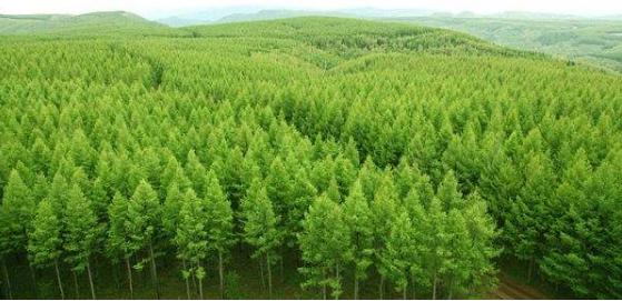 评林业副高职称的破格条件是什么
