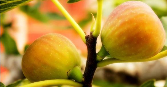 基于果品质量安全的林业果树种植技术分析