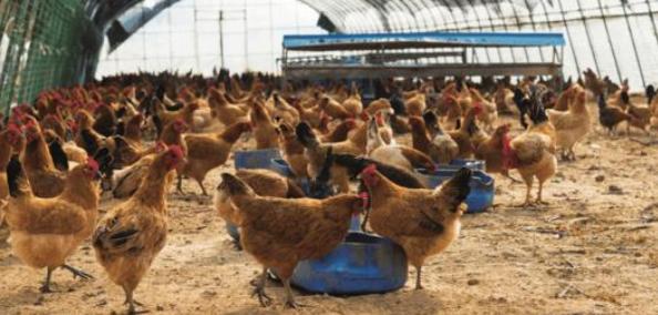 云南省养殖业粪污处理利用情况调查