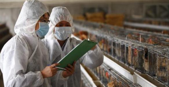 浅谈动物产品质量安全存在的安全隐患及应采取的措施
