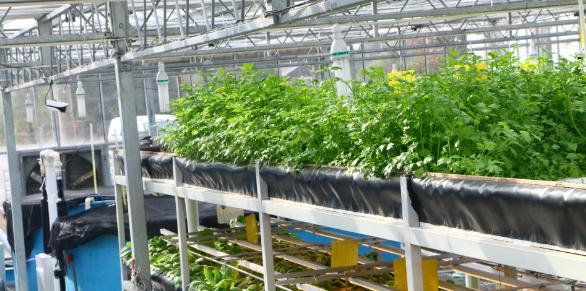 中原地区环保生态农业发展现状及路径分析