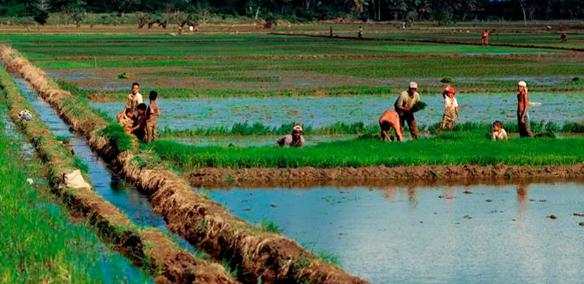 简析农业渗灌技术进展与应用