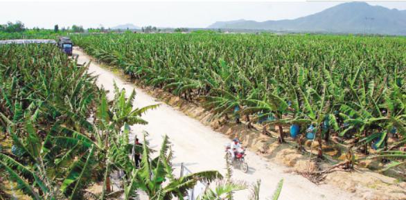 农业气象灾害及其对作物产量的影响分析
