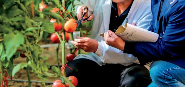 浅谈植物保护与 农产品质量安全