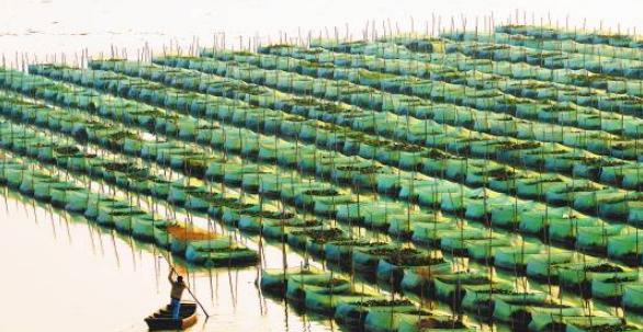 绿色生态养殖技术在淡水养殖中的应用
