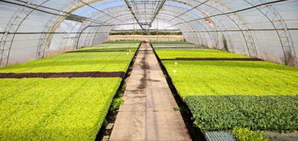 德州市智慧农业产业园发展中营商环境优化措施探讨