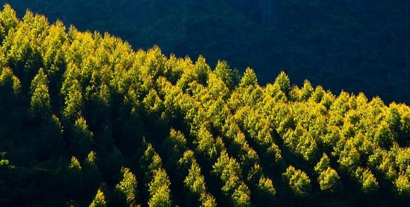 速生桉树营造林技术与林业经济效益分析