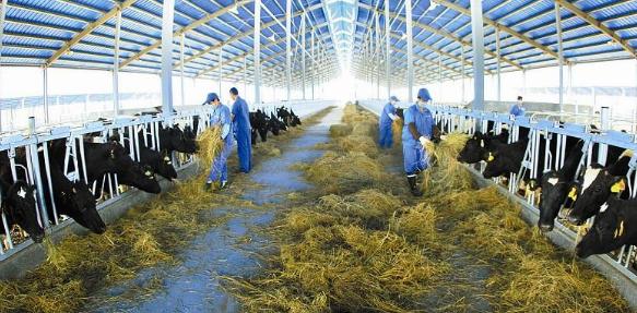 加大金融支持畜牧业力度