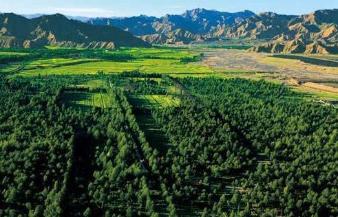 林业生态环境保护与林业经济发展初探