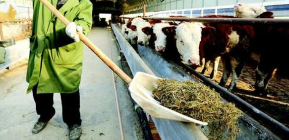 构树叶作为动物饲料的应用研究进展