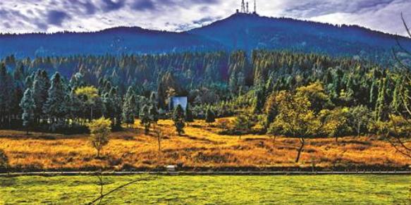 新形势下森林资源管理和生态林业的发展方向