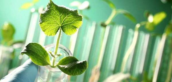 转基因植物在农业的应用现状分析