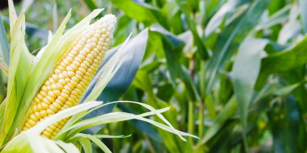 不同药剂防治玉米草地贪夜蛾试验