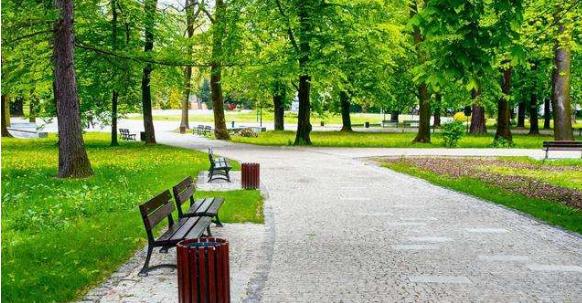 城市园林绿化存在问题及措施