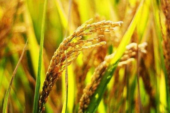 农业植物检疫在农业经济发展中的作用探析