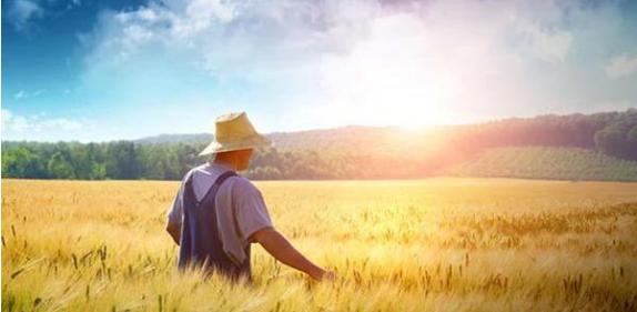 新农村背景下农业经济管理的策略研究